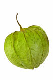 Tomatillo Husk Tomato Royalty Free Stock Photos