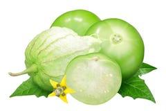 Tomatillo plewy pomidor, pęcherzyca Zdjęcia Stock