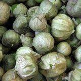 Tomatillos Stock Photography