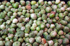 Tomatillos 免版税库存图片