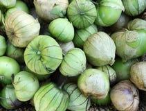 Tomatillos freschi fotografie stock