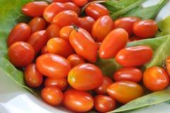 Tomatkinesgrönkål Royaltyfria Foton