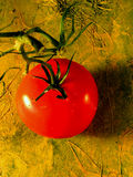 Tomato. Still life tomato Stock Images