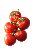 Tomato 1 Royalty Free Stock Images