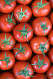 Tomato. To live and to live healthy tomato Stock Images