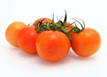 Tomato. Very fresh tomato in white background Royalty Free Stock Images