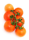 Tomato. Very fresh tomato in white background Stock Image