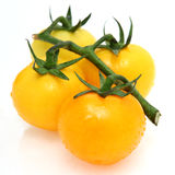 Tomato. Very fresh tomato in white background Stock Images