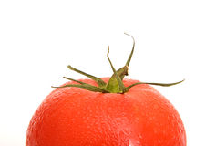 Tomato. Fresh red tomato on isolated background Stock Images
