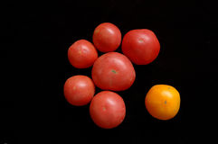 Tomato. Es red ones and yellow one Stock Images
