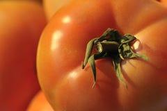 Free Tomato Stock Image - 11086951