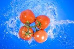 Free Tomato Stock Photo - 12031970