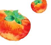 Tomato Royalty Free Stock Image