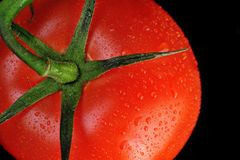 Tomato. Fresh juicy red tomato with drops Royalty Free Stock Photo