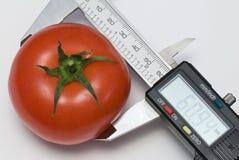 Tomato. Single tomato under calibration by electronic digital caliper royalty free stock photo