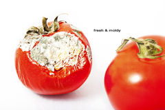 Tomato. Tomate Fesh and Moldy on white background Royalty Free Stock Images