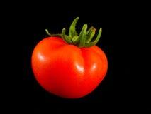 Tomato. Neat tomato Stock Photos