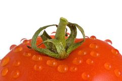 Tomato. Close up shot of a wet tomato isolated from background Royalty Free Stock Photo