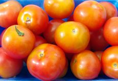 Tomato. Bright colorful bunch of ripe juicy tomato closeup Royalty Free Stock Photography