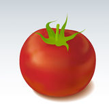 Tomato. Illustration of tomato in realistic manner Royalty Free Stock Photo