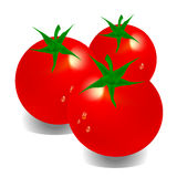 Tomato. Without a background illustration of a red tomato Stock Photo