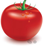 Tomato. A big and delicious tomato Stock Photo