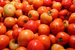 Free Tomato Stock Images - 28291884