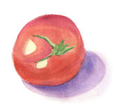 Tomato. One tomato painted in watercolor Royalty Free Stock Images