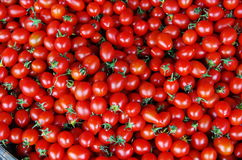 Tomato. Originated in America was spread around the world Stock Photo