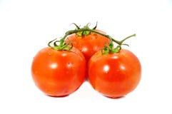 Tomato. Tree tomato on white backgroud Stock Photos
