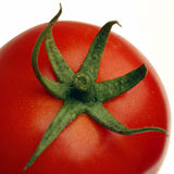 Tomato. Close-up of tomato stem royalty free stock photos