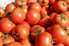 Free Tomato Royalty Free Stock Photography - 38858417