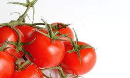 Tomato 5. Tomatoes on the vine, on a white table top royalty free stock images