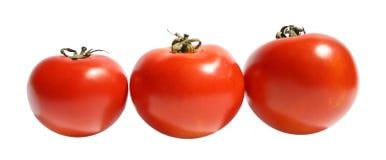 Tomato. Ripe tomato on a white background Royalty Free Stock Image