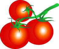 Tomato. Three ripe tomatoes on branch Royalty Free Stock Image