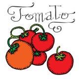 Tomato vector illustration
