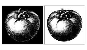 Tomato. Han drawing in black and white Stock Photos