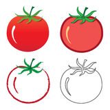 Tomato. Vector illustration of tomato in different styles Stock Photo