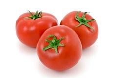 Tomato. royalty free stock photography