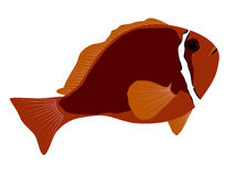 Tomato Anemonefish illustration Stock Photos