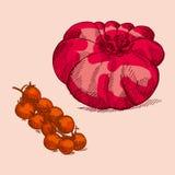Tomato assorted Royalty Free Stock Photos