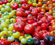Tomato assortment Royalty Free Stock Photography