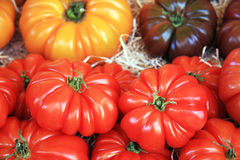 Tomato assortment Royalty Free Stock Photos