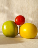 Tomato. Autumn goodies - red green and yelow tomatoes royalty free stock photos