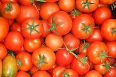Tomato background. Fresh Tomato background. Healthy Lifestyle Stock Images