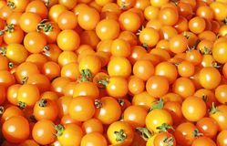Tomato_background Imagens de Stock Royalty Free