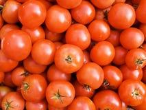 Tomato background Stock Image
