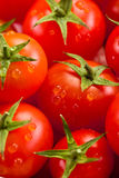 Tomato background Stock Photography