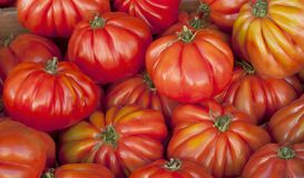 Tomato background. In the market of France stock image