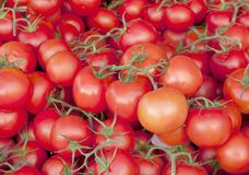 Tomato background. In the market of France royalty free stock photo